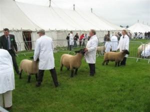 Sheep Fair