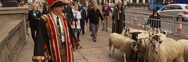 Sheep Drive 2013