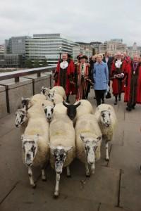 sheepdrive