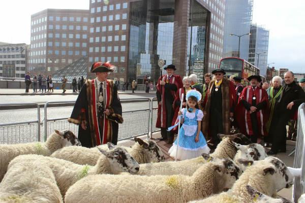 Sheep Drive Photo 10