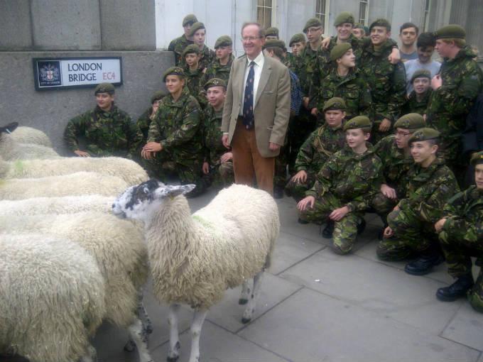 Sheep Drive Photo 5