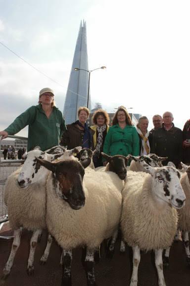 Sheep Drive Photo 7