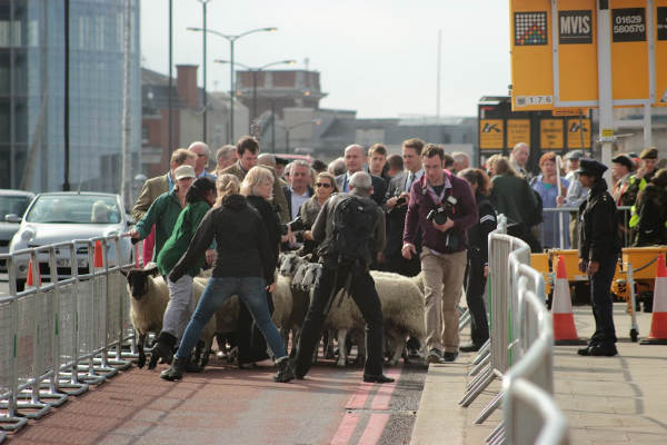 Sheep Drive Photo 9