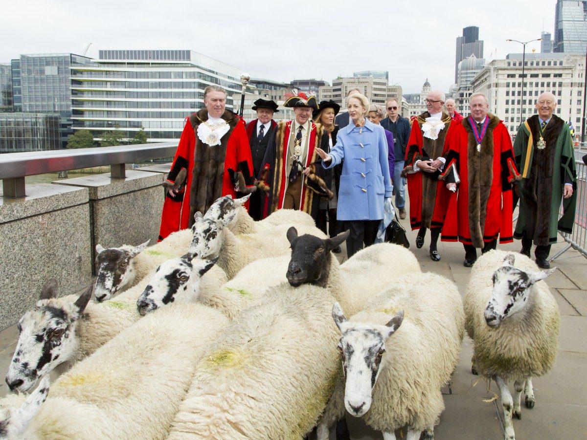 Sheep Drive London